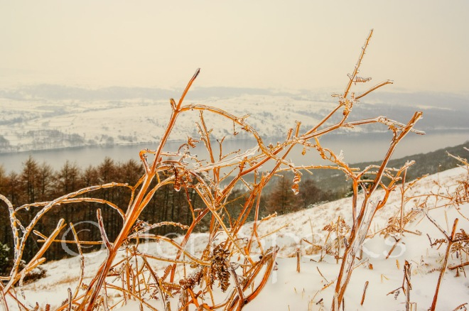 I know where she means,' said Peggy. 'It's the country on the fells above the tarn. It's as wild as wild.'